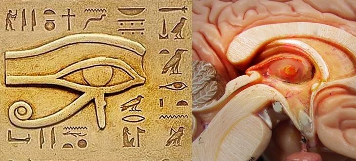 el tercer ojo y la glandula pineal